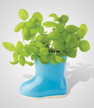 Mini Garden in a Blue Rain Boot