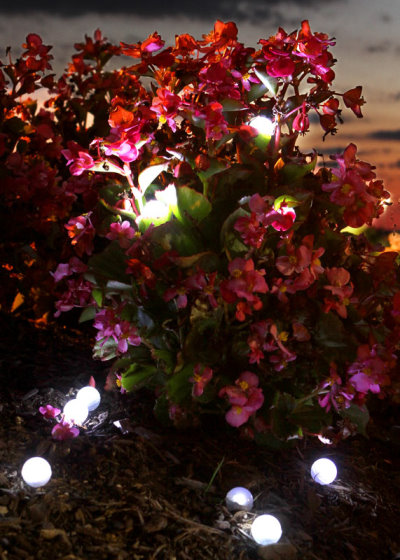 Fairy Berries add Some Magic Lights to Your Home and Lawn