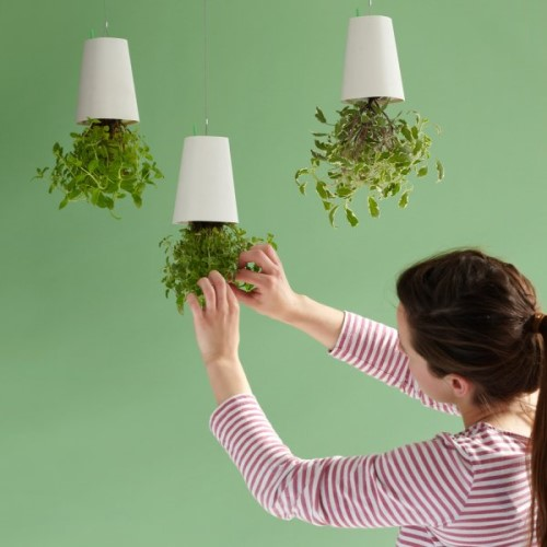 Sky Planter Keeps Your Flowers Upside Down