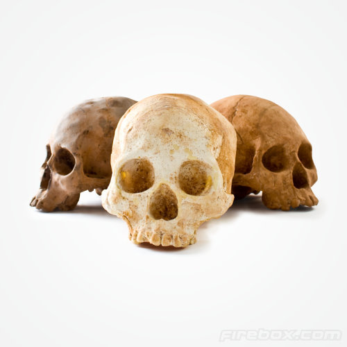 2.5Kg Chocolate Skulls in Three Flavors